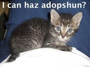 I can haz adopshun?